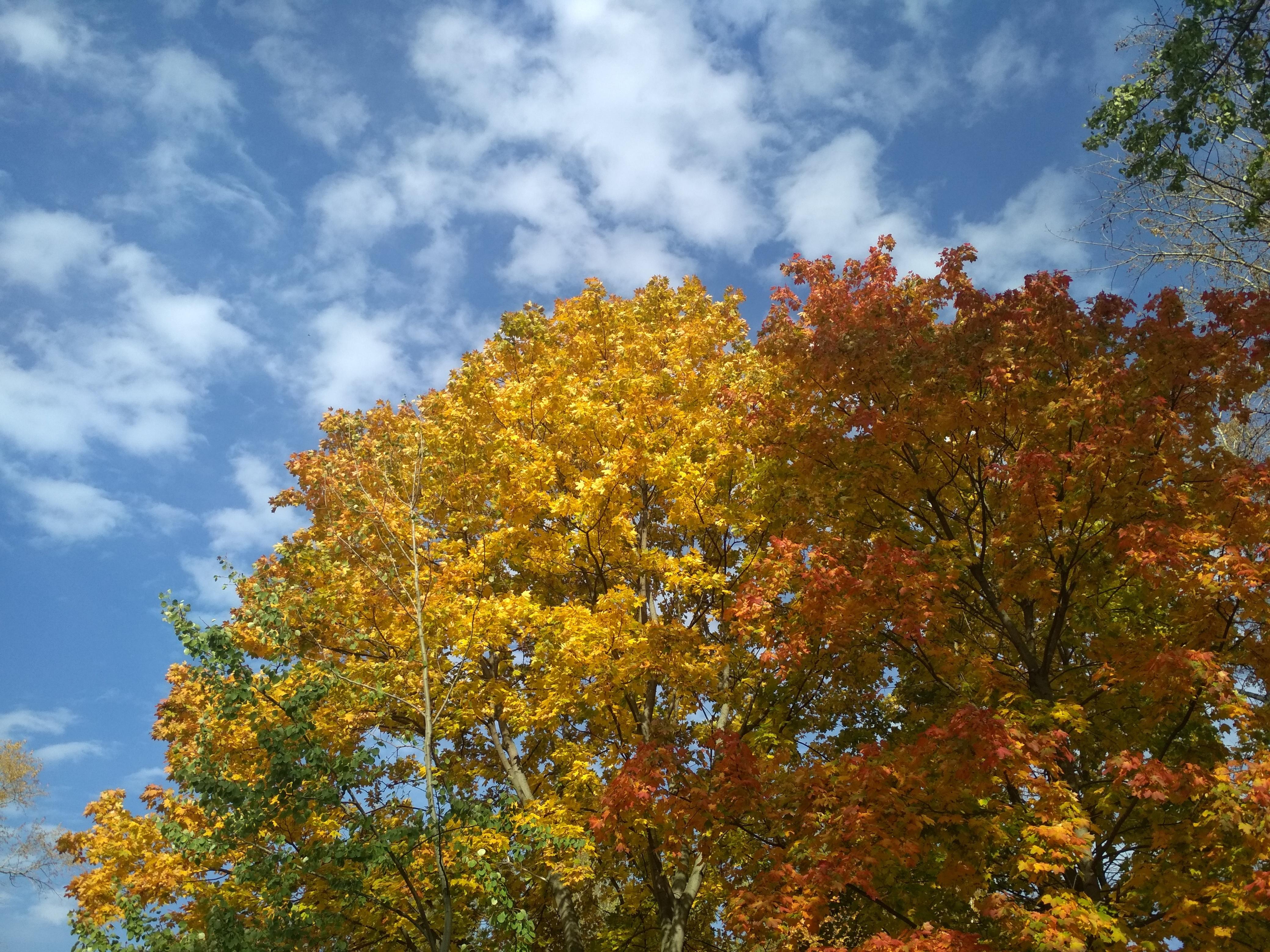 Просто фото  Осень