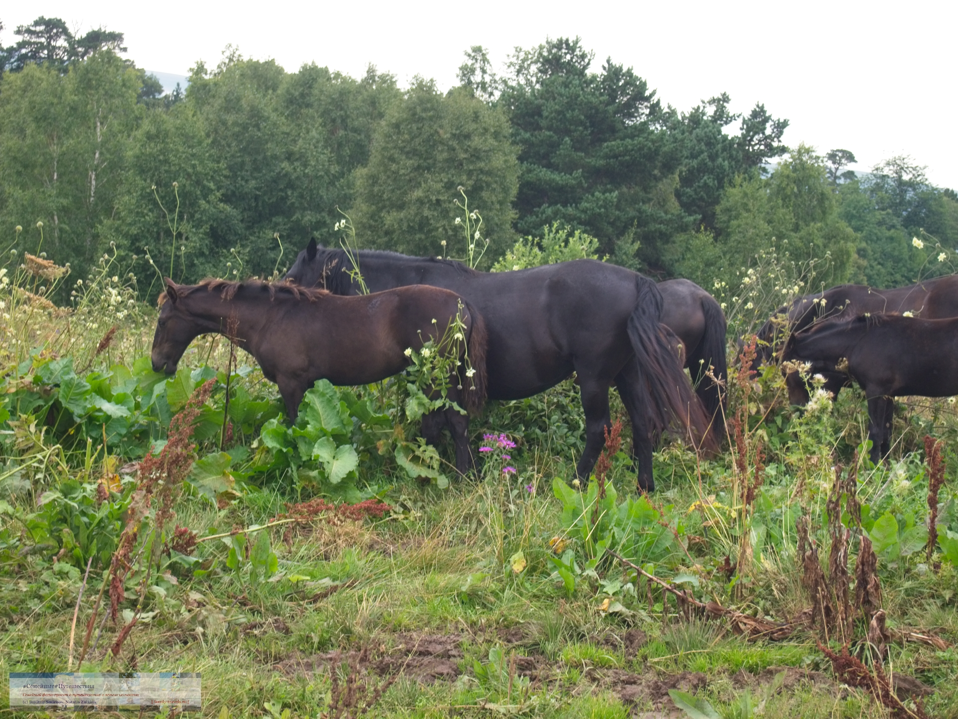 Просто фото  Ходют кони...