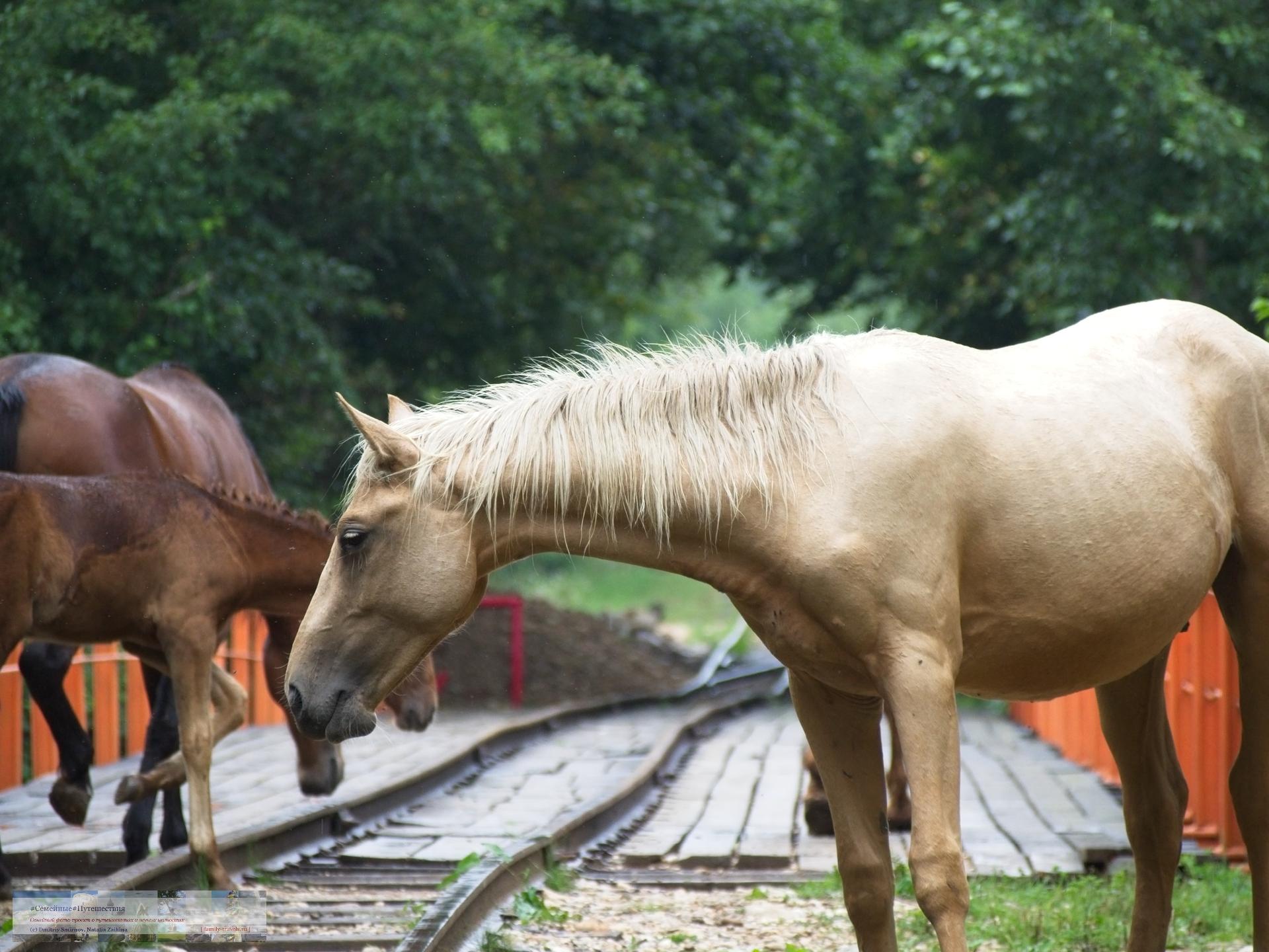 08092018-1736-Blog-057 Просто фото  Ходют кони...