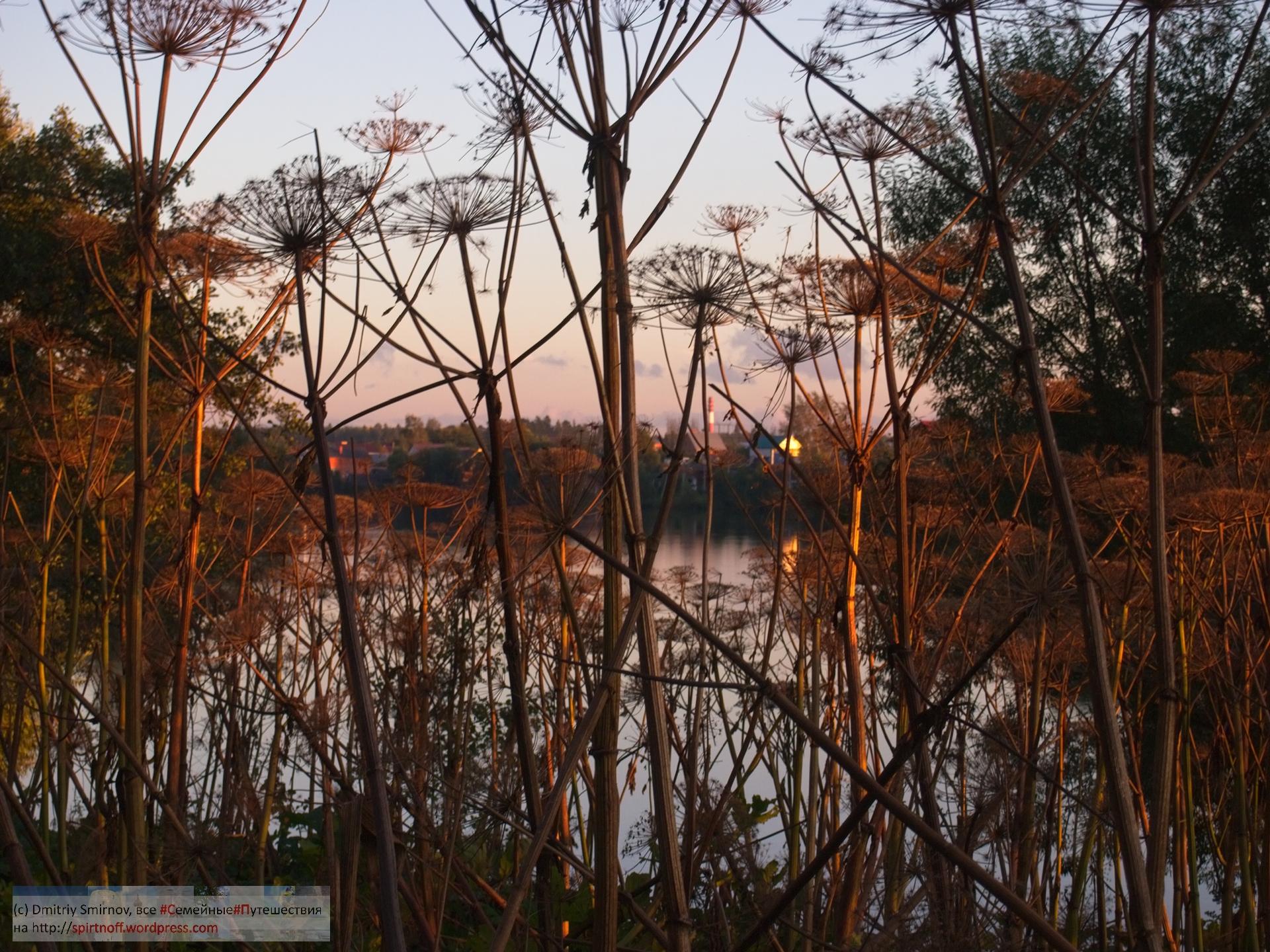 P9160781-Blog-20 Просто фото  Немного Барского пруда