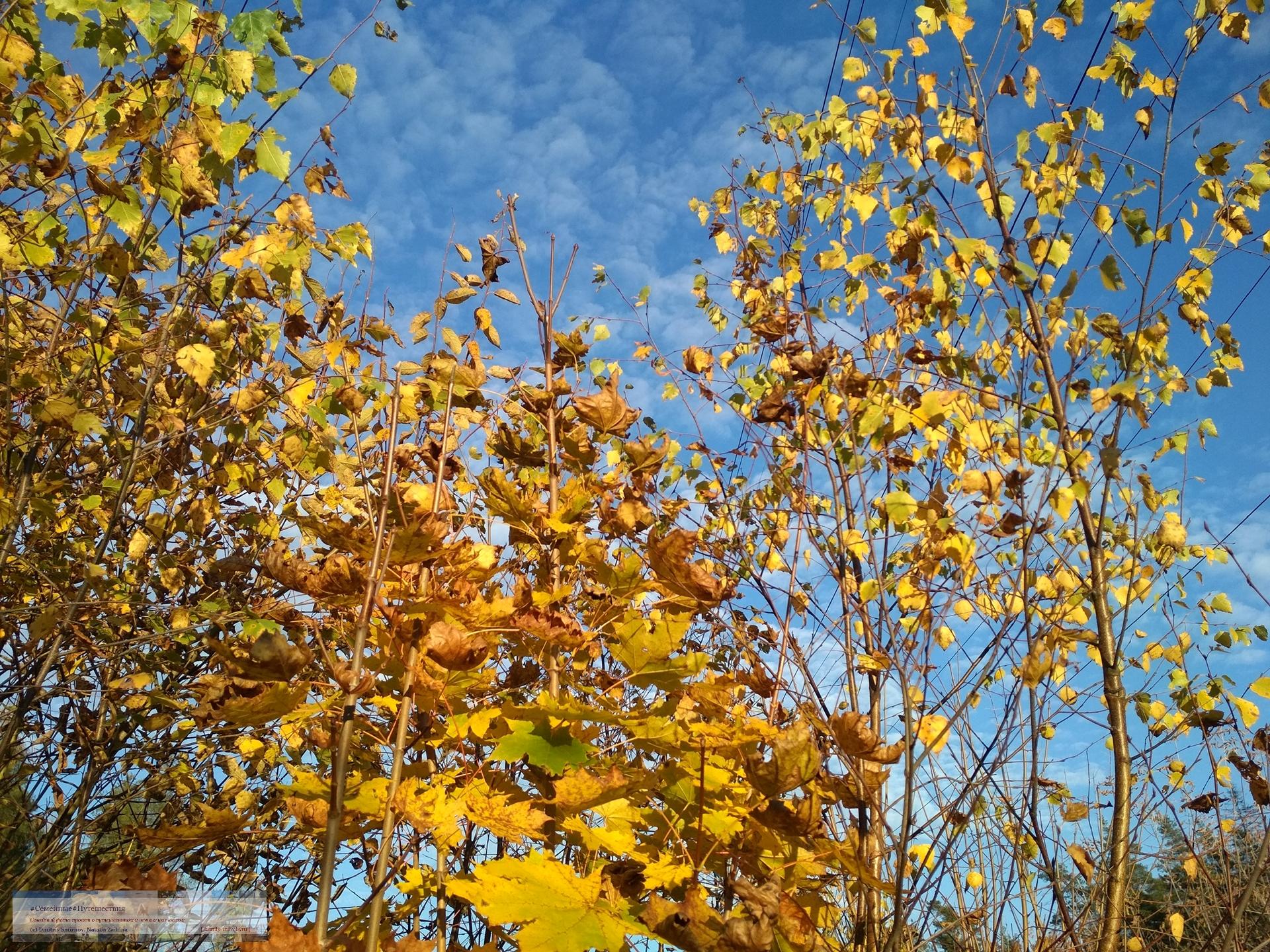 10132018-1620-Blog-02 Просто фото  Золотая осень (2018)
