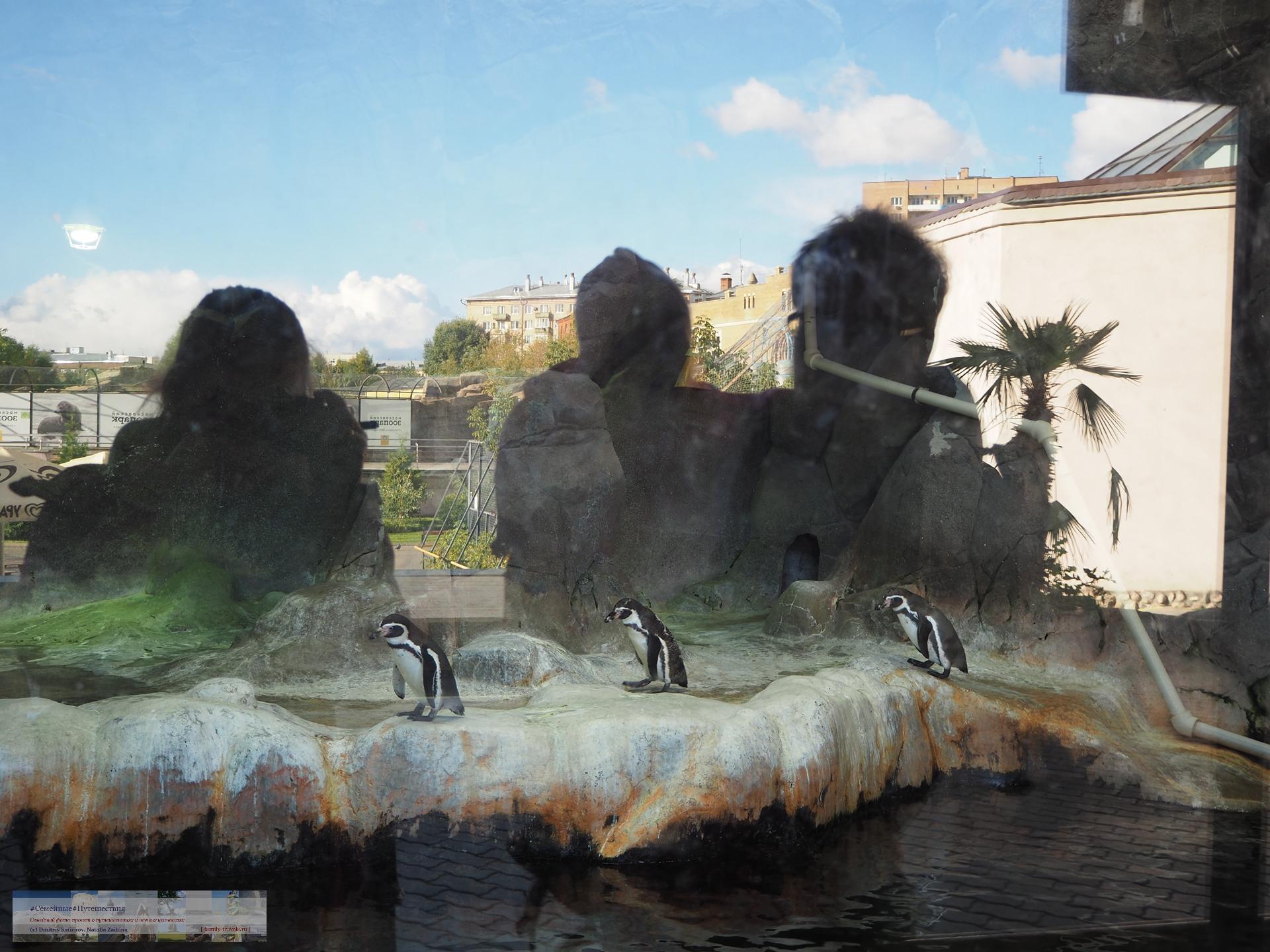 Просто фото  Тоска. Осень. Зоопарк.