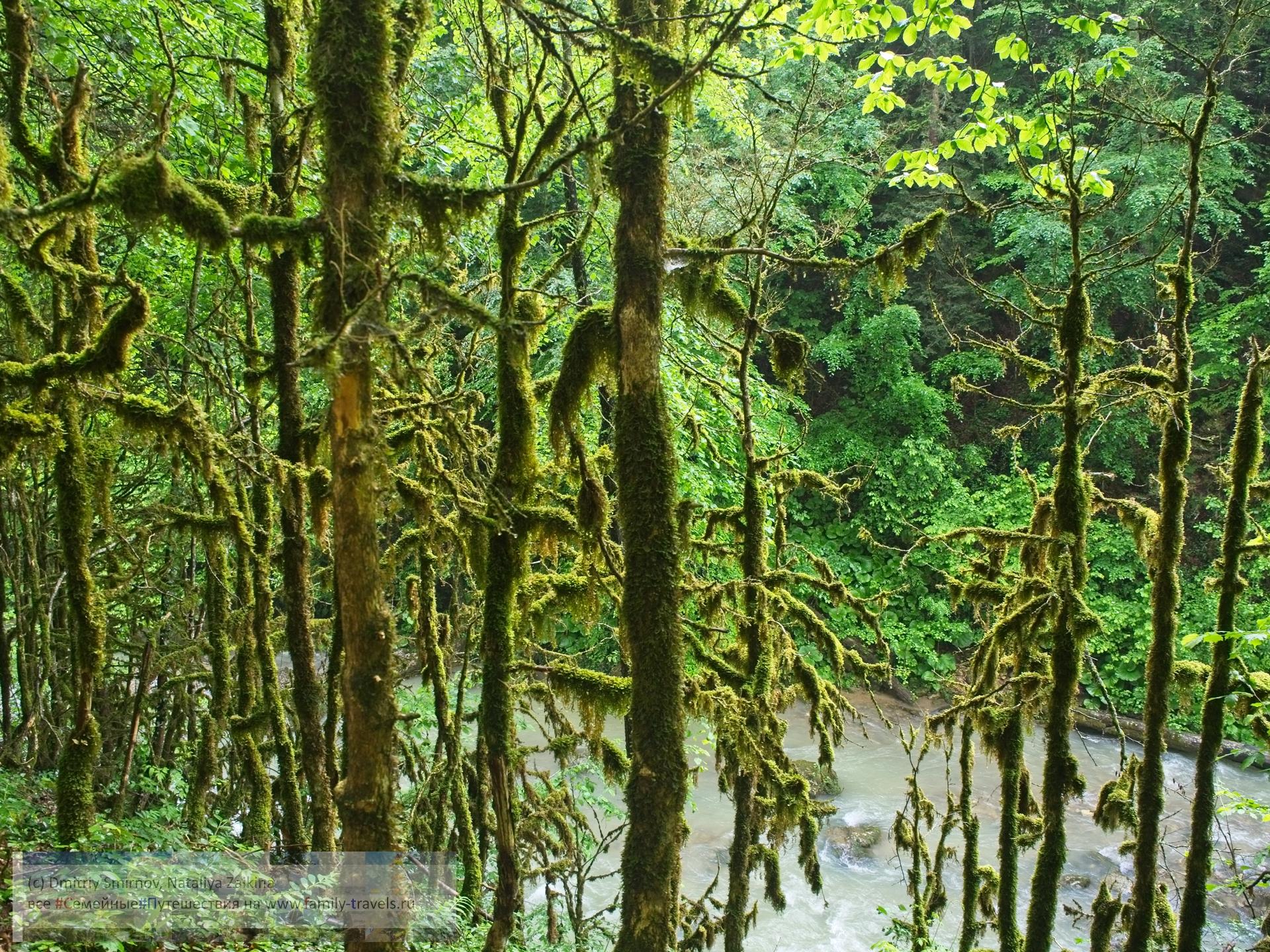 Путешествия  Водопад Исиченко и ущелье реки Курджипс (трек)